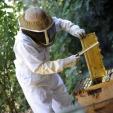 La législation en apiculture et les obligations de l'apiculteur